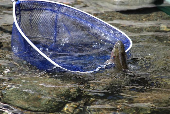 早戸川国際マス釣り場